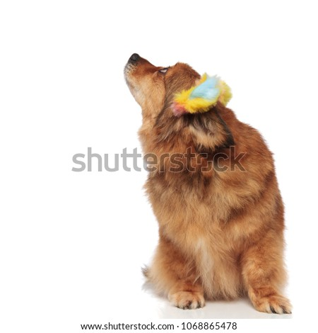 adorable brown dog with colorful ears headband called by someone Stock photo © feedough