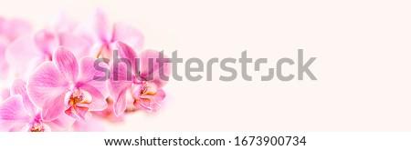 rosa · orchidea · fiori · biglietto · d'auguri · design · floreale - foto d'archivio © artjazz