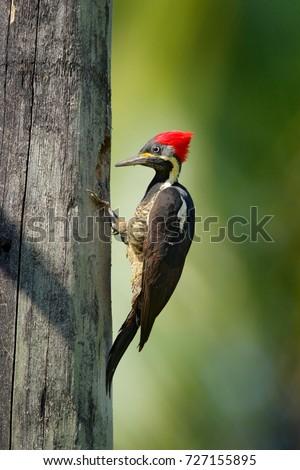 сидят филиала гнезда дыра птица природы Сток-фото © Lopolo