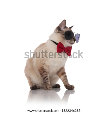 seated classy burmese cat wearing sunglasses looks down to side Stock photo © feedough