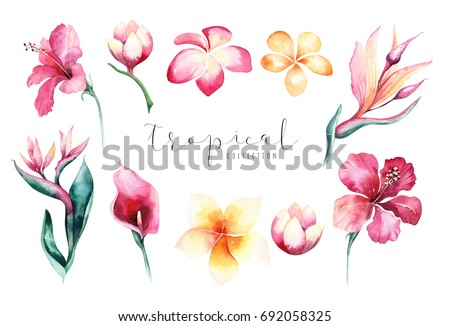 collection of hand drawn tropical flowers leaves jungle plants stock photo © margolana