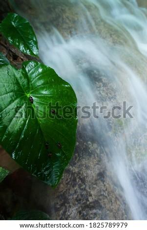 большой водопад зеленый тропические лес Focus Сток-фото © galitskaya