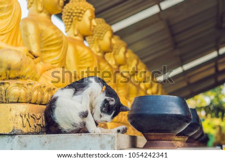 The cat sits on the background of Buddha statues, Face of gold buddha, Thailand, Asia Stock photo © galitskaya