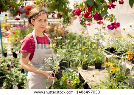 pretty gardener in apron choosing new sorts of plants to sell on the market stock photo © pressmaster