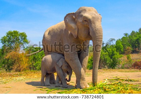 A man with a baby feeding elephant Stock photo © galitskaya