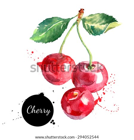Hand drawn watercolor painting cherry on white background. Vector illustration of berries. Stock photo © designer_things