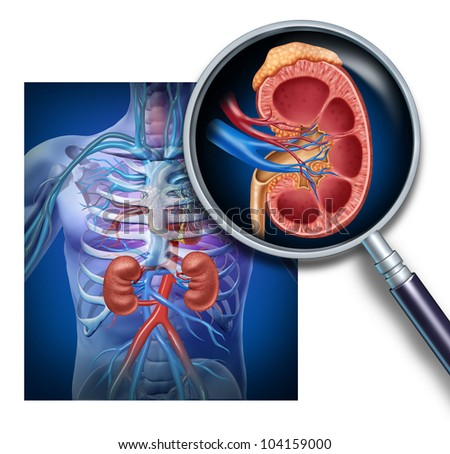 human kidney cross section on black background with clipping p stock photo © pixelchaos