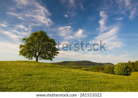 Memorial maple tree on the mystic place in Votice, Czech Republi Stock photo © CaptureLight