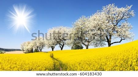 美しい 木 路地 フィールド 太陽 ストックフォト © meinzahn