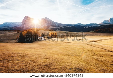 lovely yellow field in sunlight location place dolomiti compac stock photo © leonidtit