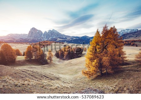 Stock photo: Lovely  yellow larches in sunlight. Location place Dolomiti, Com