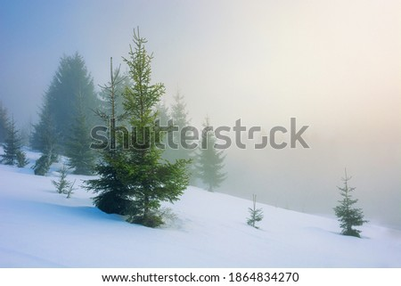 Morning fog covered the hills with spruces. Dramatic and gorgeou Stock photo © Leonidtit