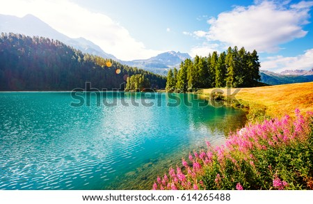 Lovely view of blooming green field. Location place Seljalandfos Stock photo © Leonidtit