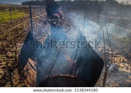 Burning of the vines in winter, vineyard, AOC SAINT-EMILION, GIRONDE Stock photo © FreeProd