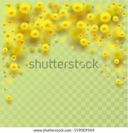 Giallo fiore soffice petali trasparente biglietto d'auguri Foto d'archivio © orensila