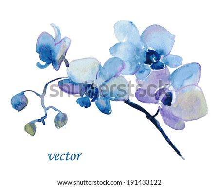 Orquídea flores cartão vetor aquarela primavera Foto stock © frimufilms