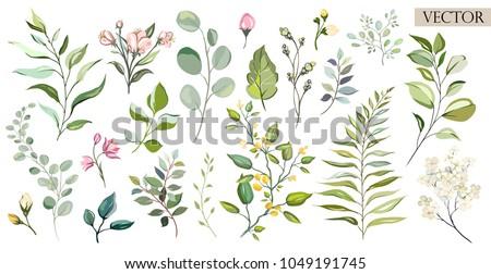 セット 水彩画 要素 ハーブ 葉 花 ストックフォト © bonnie_cocos