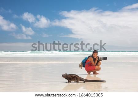 Vadvilág tengeri iguana sétál tengerpart mikulás Stock fotó © Maridav
