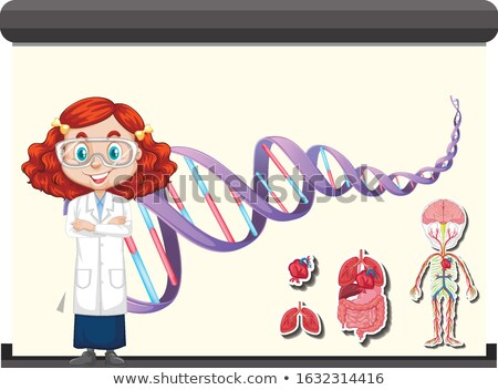 Naukowiec DNA schemat anatomia człowieka pokładzie ilustracja Zdjęcia stock © bluering