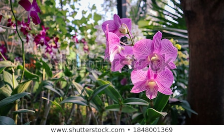 Pink and purple dendrobium orchid pattern background Stock photo © shawlinmohd