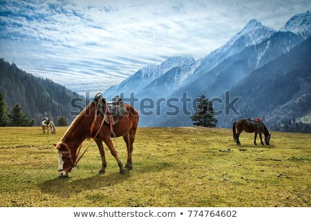 Cavalo himalaia vale paisagem campo verde Foto stock © dmitry_rukhlenko