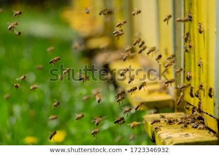 Apiary with bees Stock photo © jossdiim