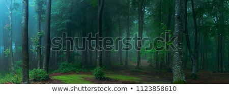 Stock fotó: Man In A Forest With Fog