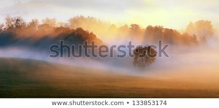 molhado · nebuloso · paisagem · árvores · céu · sol - foto stock © peterveiler