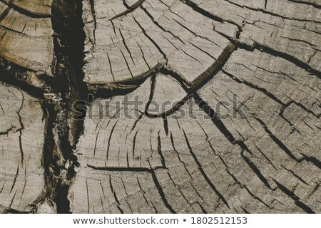 Seppia albero shot cielo natura sfondo Foto d'archivio © aremafoto