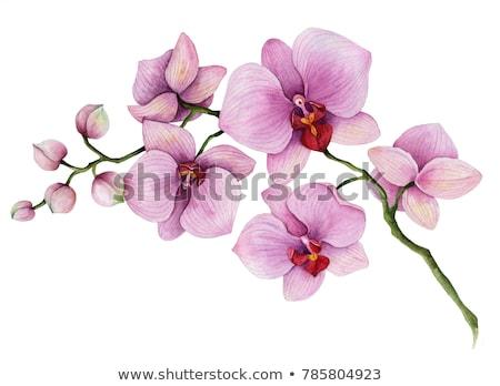 virágzó · orchidea · fekete · terv · levél · művészet - stock fotó © Stellis