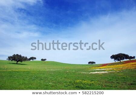 Güzel manzara Portekiz tipik başlangıç bahar Stok fotoğraf © Carpeira10