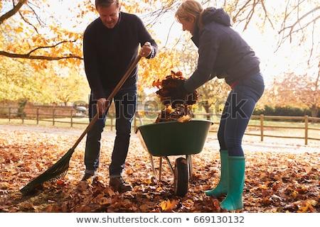 düşmek · yaprakları · bahçe · kırmızı · akçaağaç · yeşil · ot - stok fotoğraf © photography33