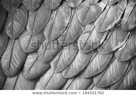 Siyah beyaz sığ doğa kuş tüy Stok fotoğraf © Pietus