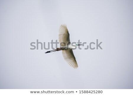 pernas · longas · voar · verde · natureza · cidade · casa - foto stock © samsem