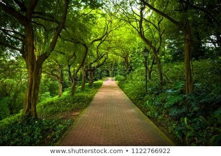 Eğreltiotu tuğla yol bahçe doğa manzara Stok fotoğraf © bobkeenan
