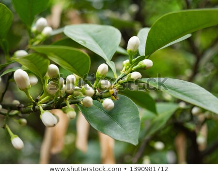 Ramo folha verde dentro ver isolado branco Foto stock © boroda