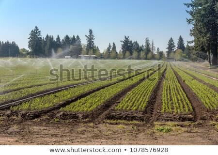 家族 ファーム 農村 オレゴン州 春 木 ストックフォト © Rigucci