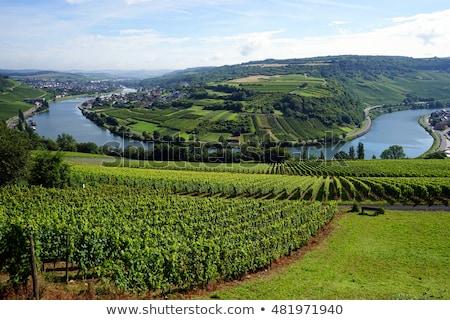 мнение · природы · пейзаж · путешествия · реке · холмы - Сток-фото © hofmeester