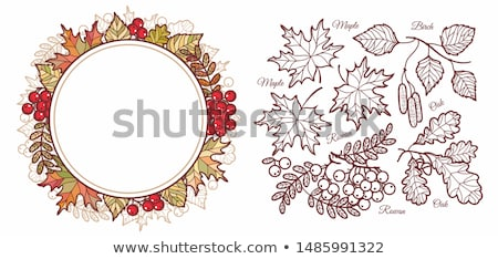 Autumn banner with mountain ash berry, vector illustration Stock photo © carodi
