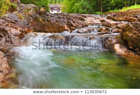 rivier · bos · hdr · water · boom · voorjaar - stockfoto © haraldmuc