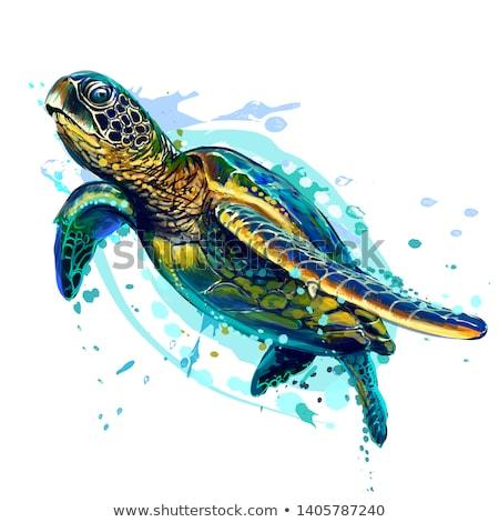 Underwater world wallpaper with turtle, vector illustration Stock photo © carodi