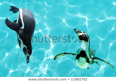 gezicht · profiel · pinguin · ogen · zon · vogel - stockfoto © shihina