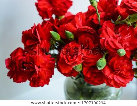 白 カーネーション 花 クローズアップ 自然 庭園 ストックフォト © stocker