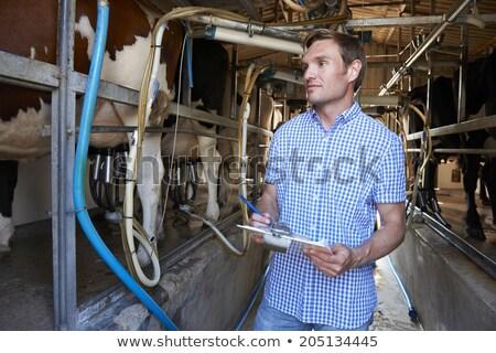 Farmer Inspecting Cattle During Milking Stock photo © HighwayStarz