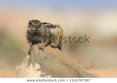 Terreno esquilo verão ilha alimentação branco Foto stock © chris2766