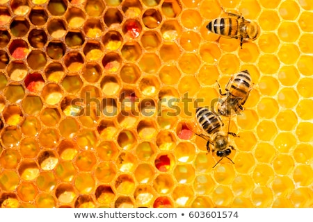 hive by the bees closeup Stock photo © OleksandrO