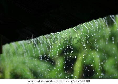 Pioggia erba acqua abstract natura Foto d'archivio © morrbyte