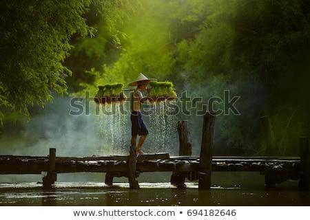 農家 · 見える · 田 · バリ · インドネシア · ファーム - ストックフォト © Komar