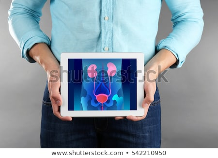 Urology Stock photo © Lightsource