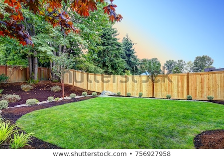 A backyard with a fence Stock photo © bluering
